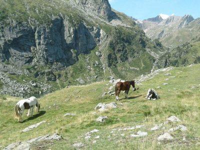 Chevaux dans la vallée d'Espingo